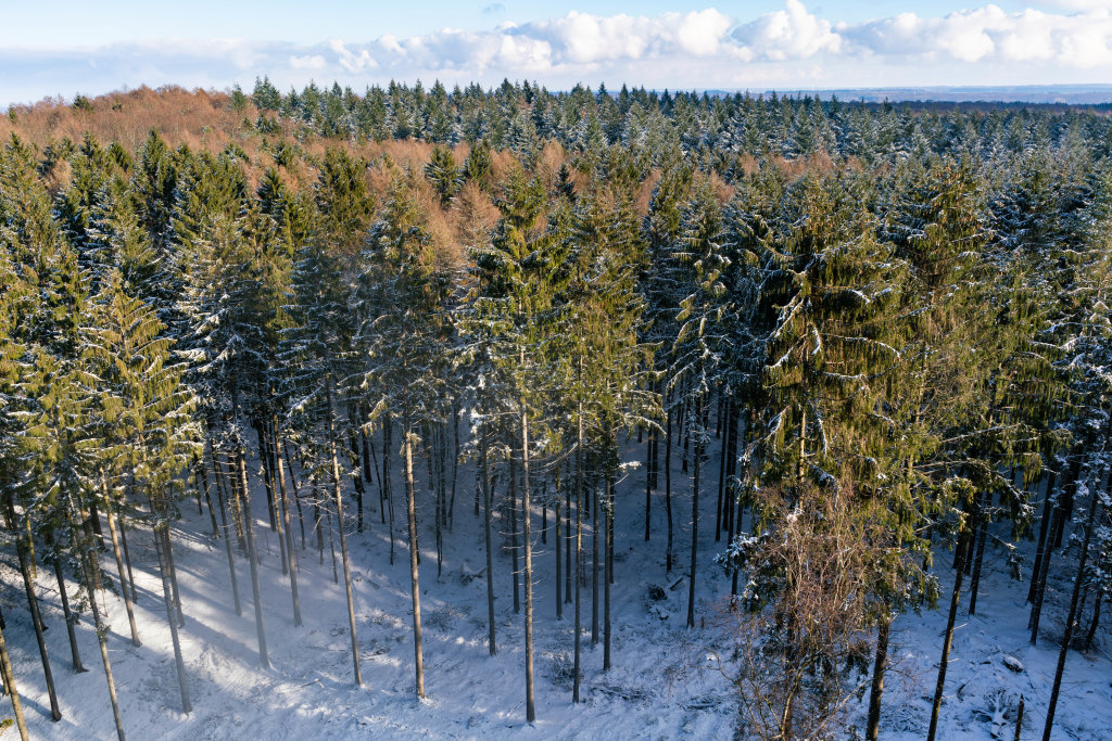 Drone view of Hahnneide forrest in winter
