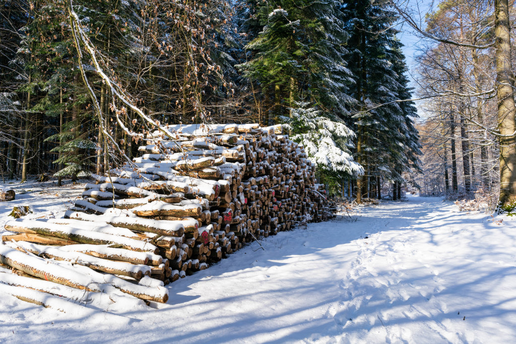 A pile of prepared tree logs waiting in the forrest covered in snow