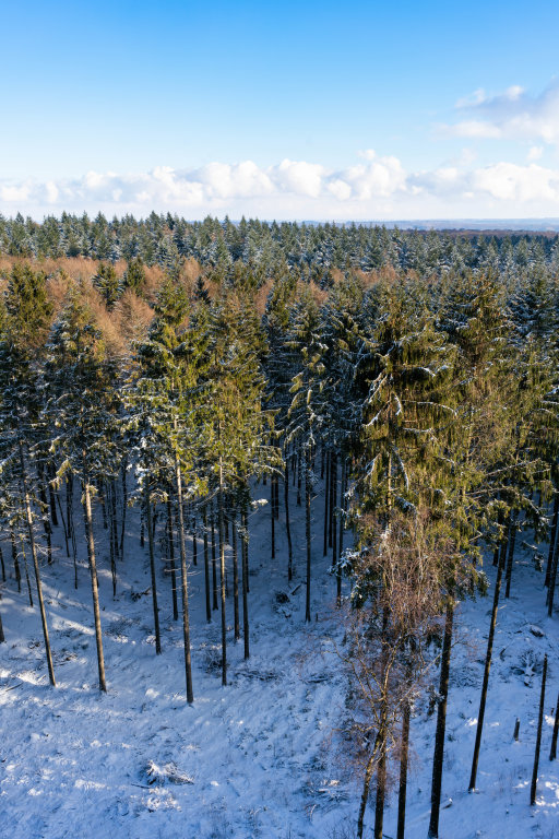 Bird-eye view of a path leading deep into the winter forrest covered with snow