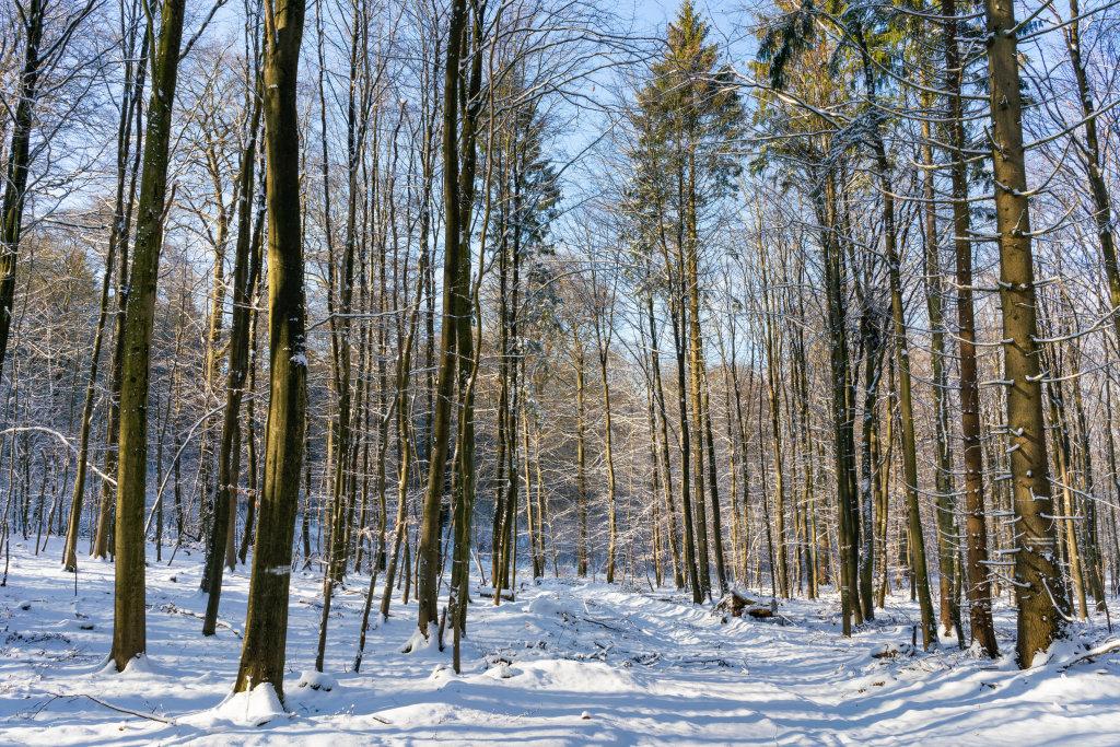 Winter forrest of Hahnneide, near Hamburg city in Germany