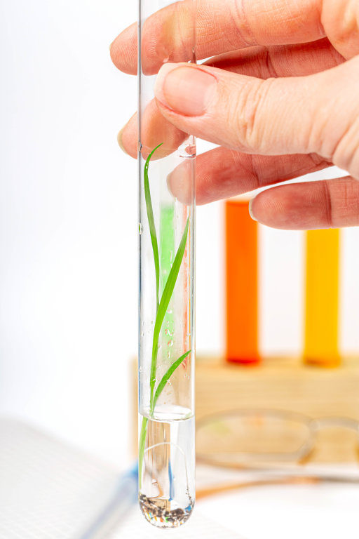 Close-up, plant with roots in a test tube with clear liquid