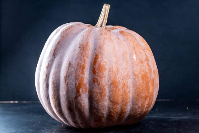 Ripe pumpkin on black background