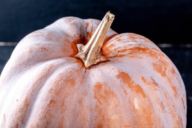 Big orange raw pumpkin close-up