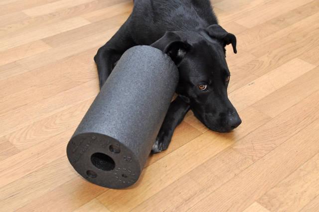 Blackroll mit Labrador