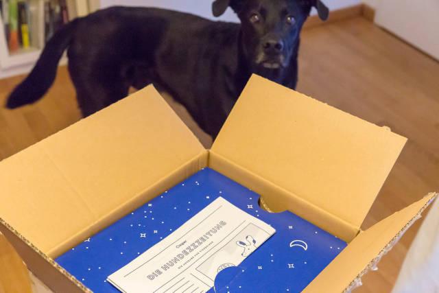 Unboxing: Casper Hundekörbchen