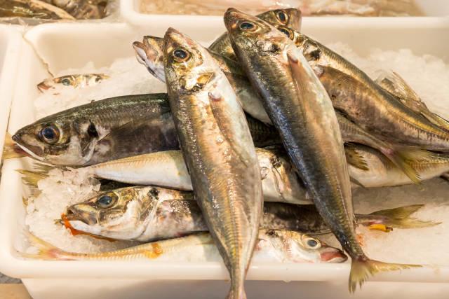 Cod fish / Kablejau