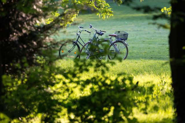 Fahrräder im Wald
