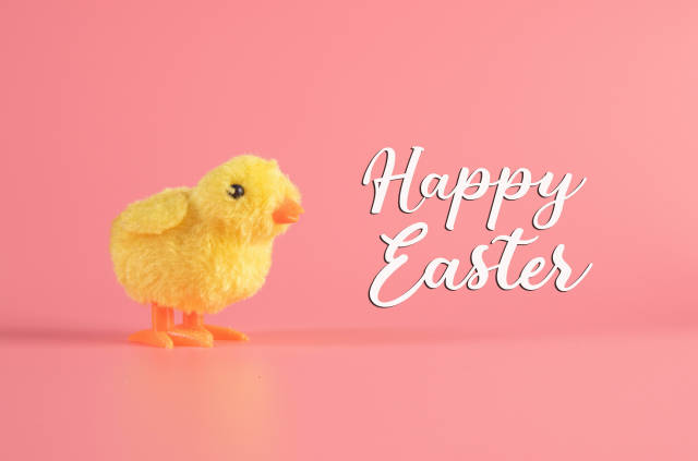 Cute little chicken with Happy Easter text
