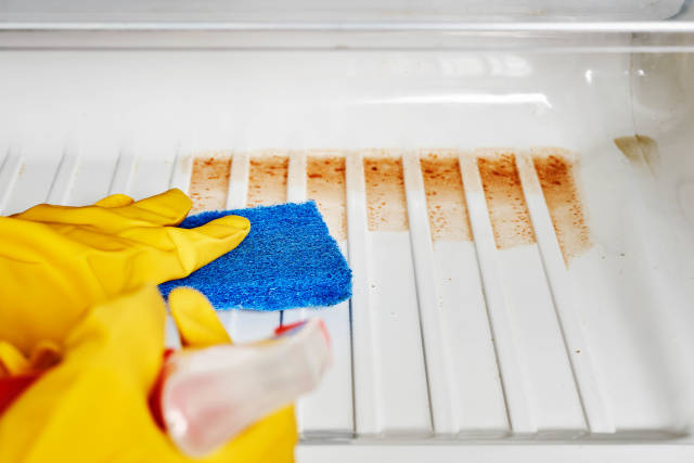 Cropped image of young woman cleaning refrigerator with sponge and spray at home