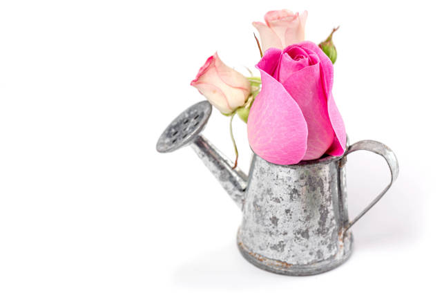 Spring background with flowers and a small watering can on white
