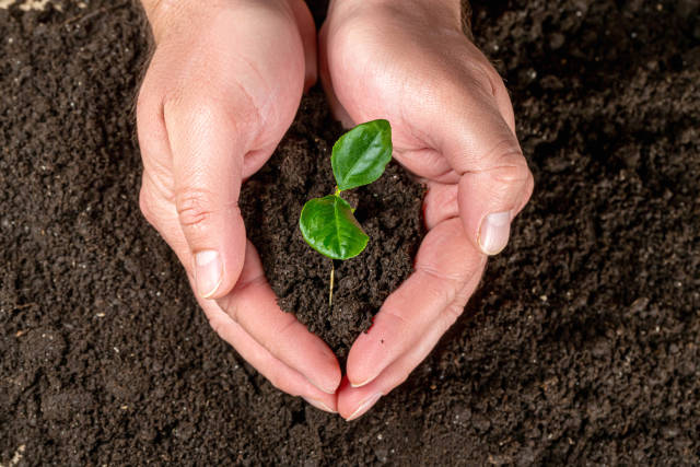 Mans hands holding young plant, ecology concept