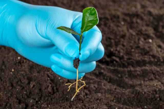 Human hand with glove holding green small plant, new life concept