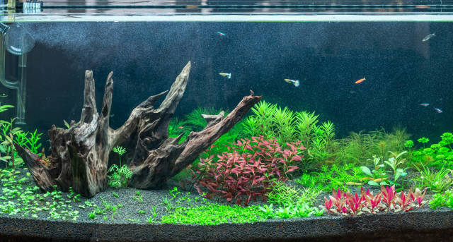 Large home aquarium with colorful fish and plants