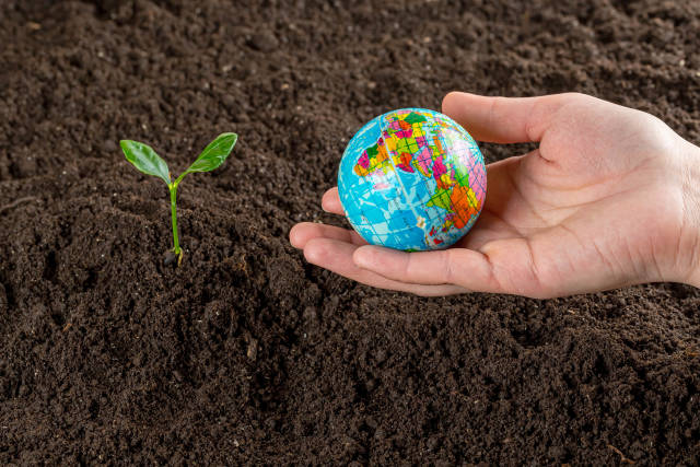 Female hand holds a globe on the background of the soil with a young tree