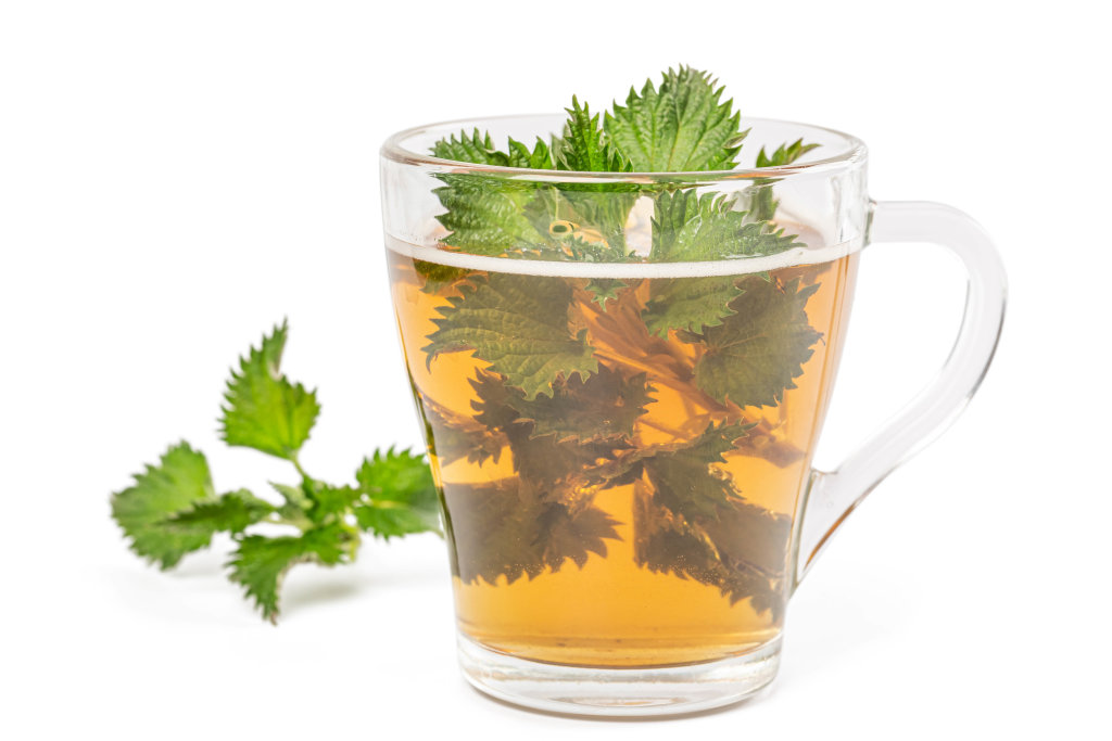 A cup of nettle tea with fresh stinging nettles