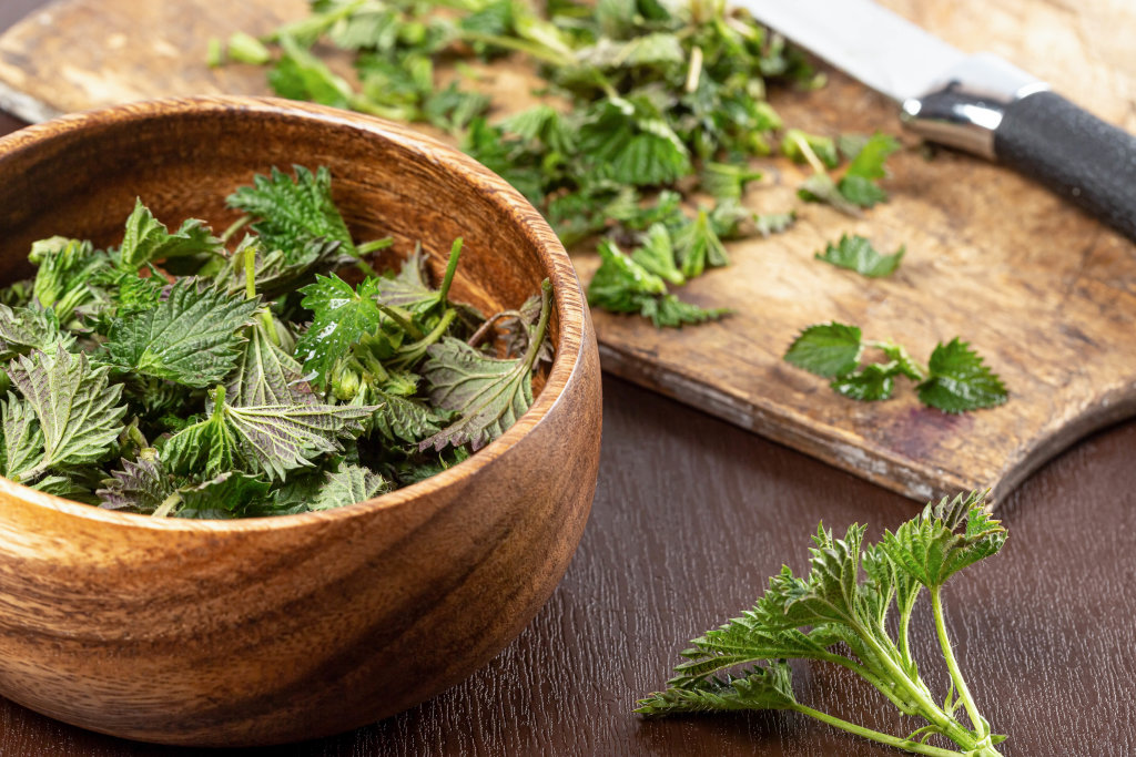 Young spring nettle tips used to make salad