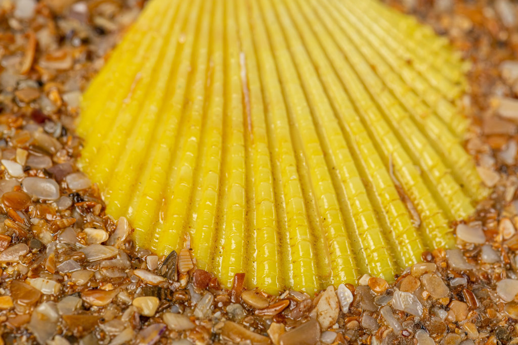 Close-up, yellow seashell as background