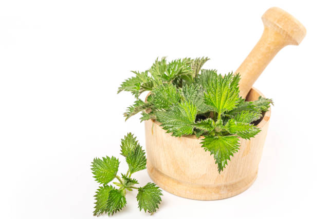 Green nettle in a wooden mortar on white, medicinal plant concept
