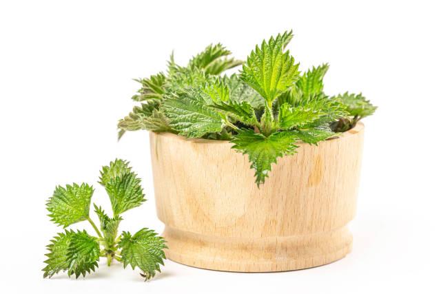 Fresh nettle in a wooden bowl