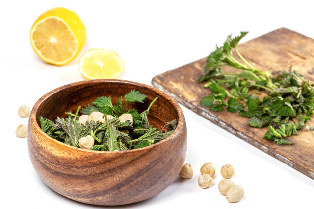 Freshly foraged organic healthy green nettle leaves with hazelnuts, diet salad