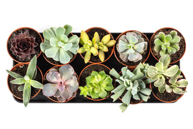 Set succulent plants on white background, top view