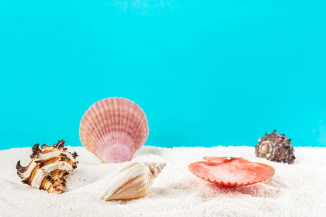 Multicolored seashells on white small stones, behind a blue background with free space