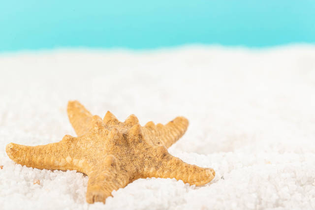 Close-up of starfish on white small stones, sea vacation concept