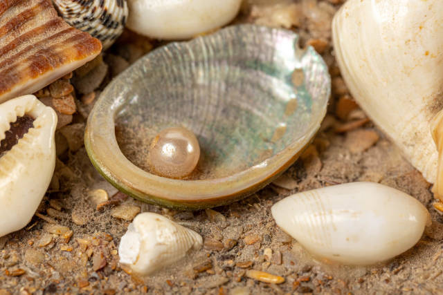 Close-up, pearl in a shell