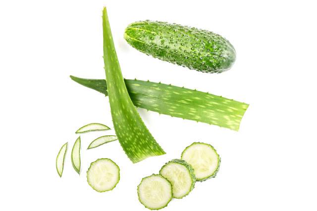 Green fresh aloe vera leaf with cucumber on white background