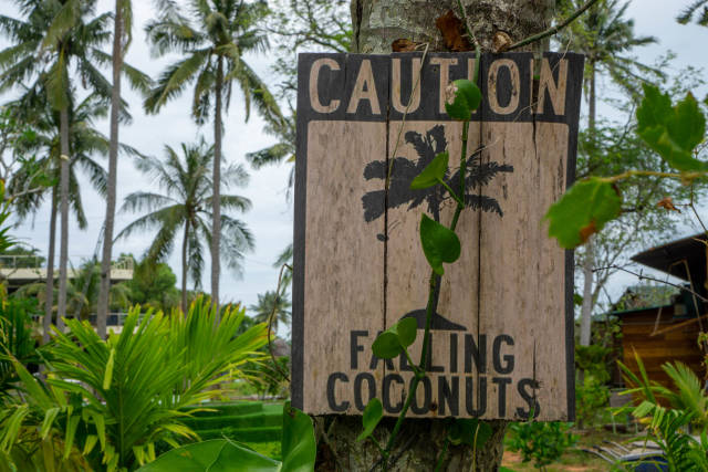 Wooden Caution Signboard warning People of Falling Coconuts with Palm Trees and Plants in the Background on Phu Quoc Island, Vietnam