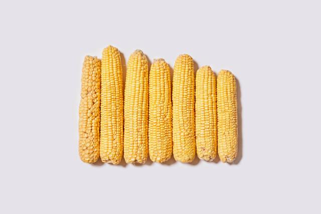 Row of fresh raw corns on white
