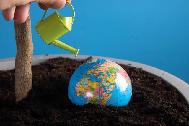 Hand watering little globe buried in dirt
